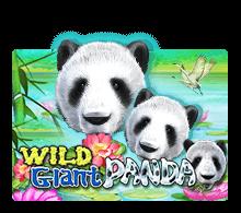 Wild Giant Panda รีวิวเกม https://jack88tm.vip/