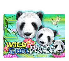 Wild Giant Panda Jack88